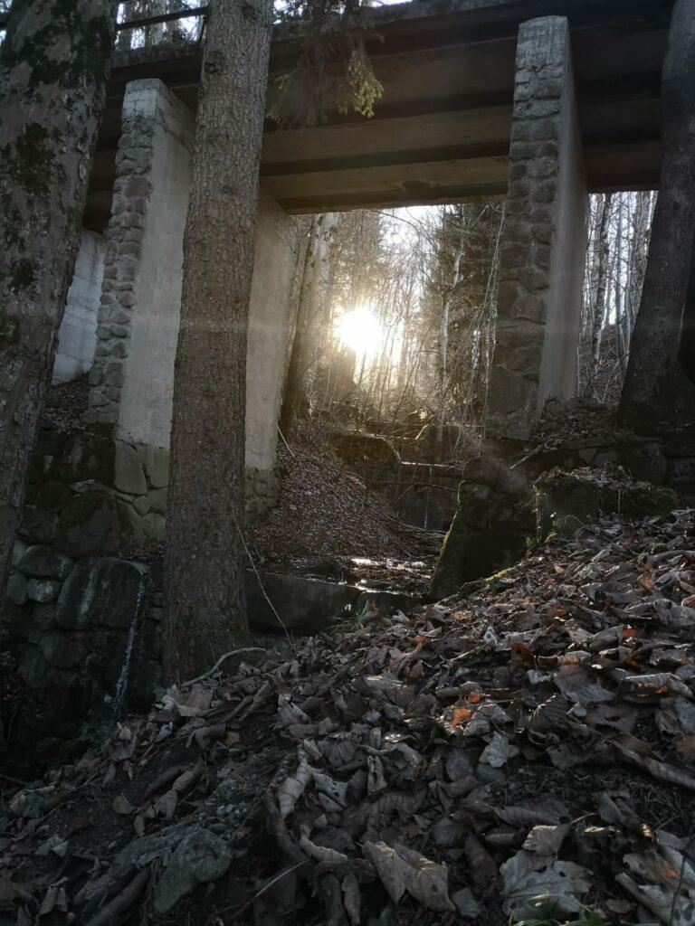 Bad Kohlgrub Blick nach oben aus der Ludwigsschlucht