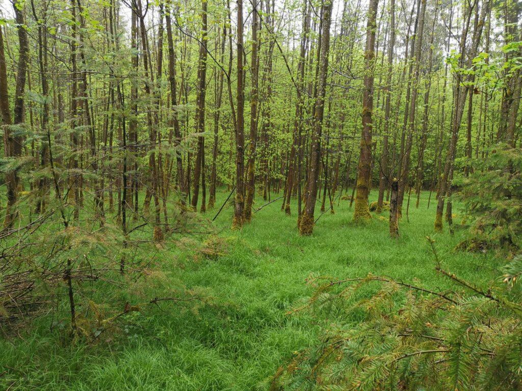 Wald im Hohenlindener Sauschütt