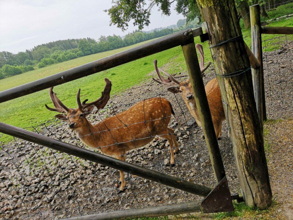 Wildgehege nach dem Eingang im Wildpark Poing