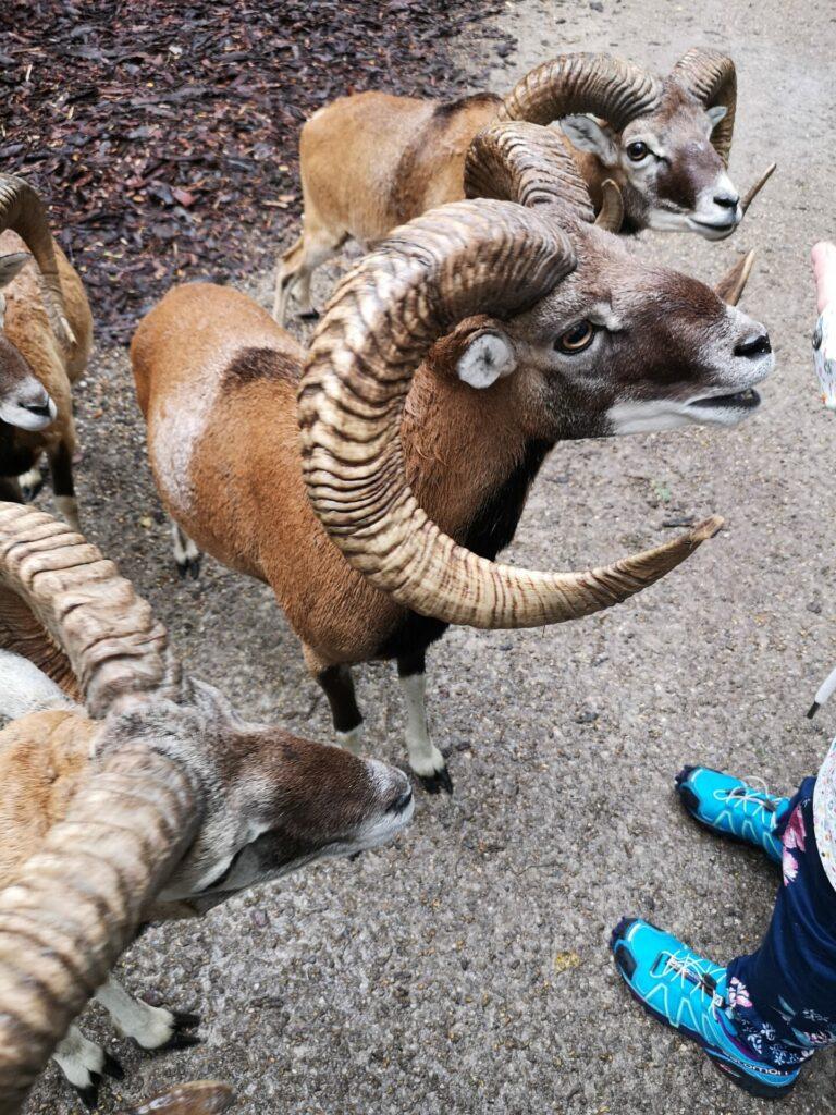 Freilaufendes Wild im Wildpark Poing (2)
