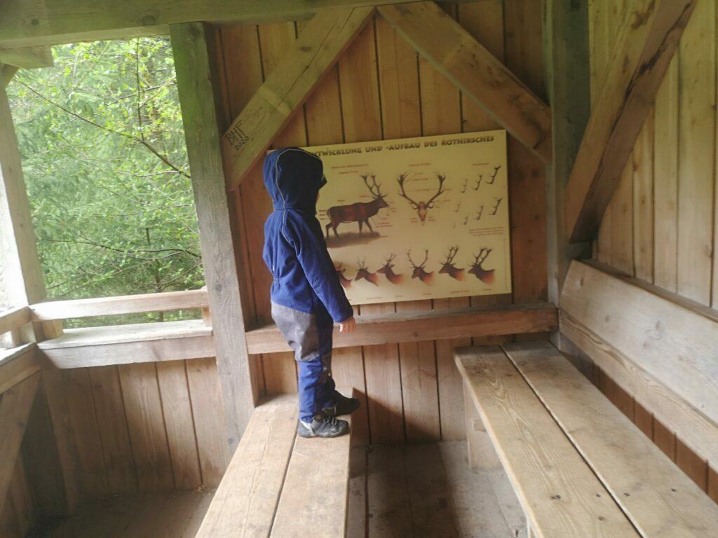 Schutzhütte am Dammwildgehege im Hohenlindener Sauschütt