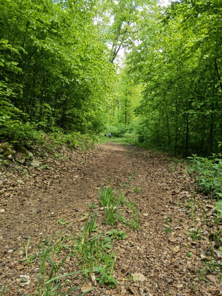 Natur-Erlebnis-Pfad am Nagelberg