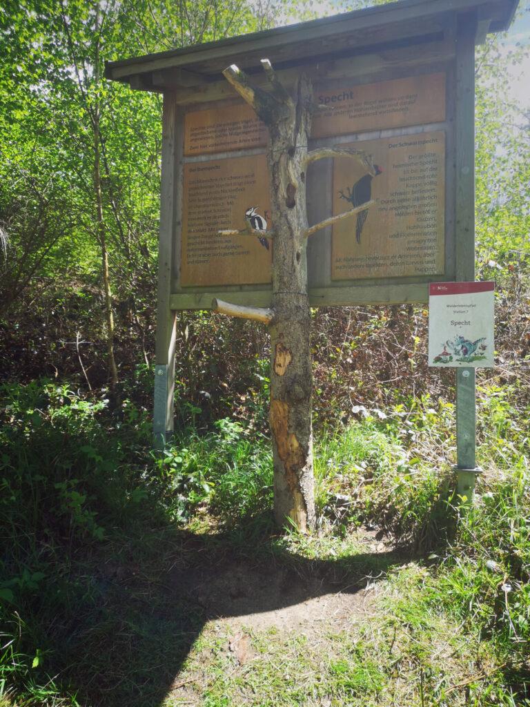 Station 7 - Walderlebnispfad Neusäß-Hainhofen