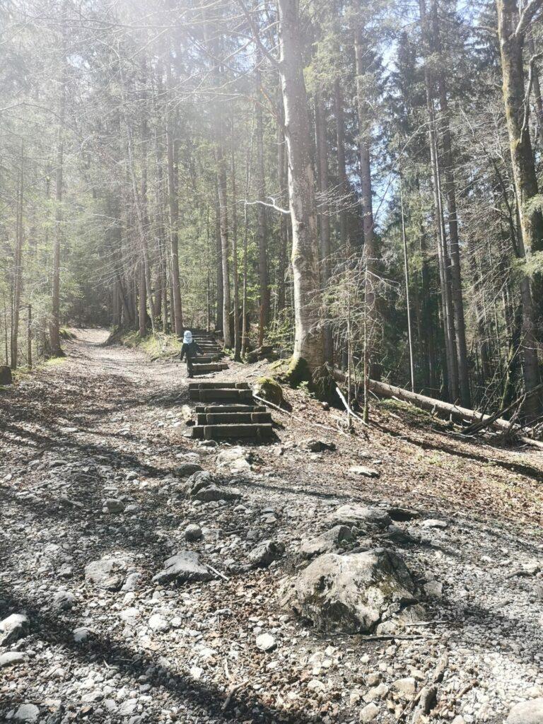 Bergauf – Sagenhafter Bergwald von Grainau