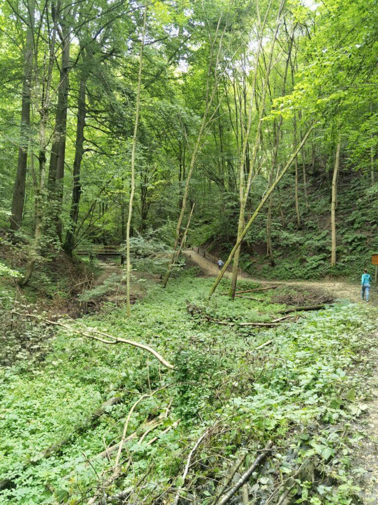 Das verwunschene Tal - Naturerlebnispfad Hansenhohl in Thannhausen