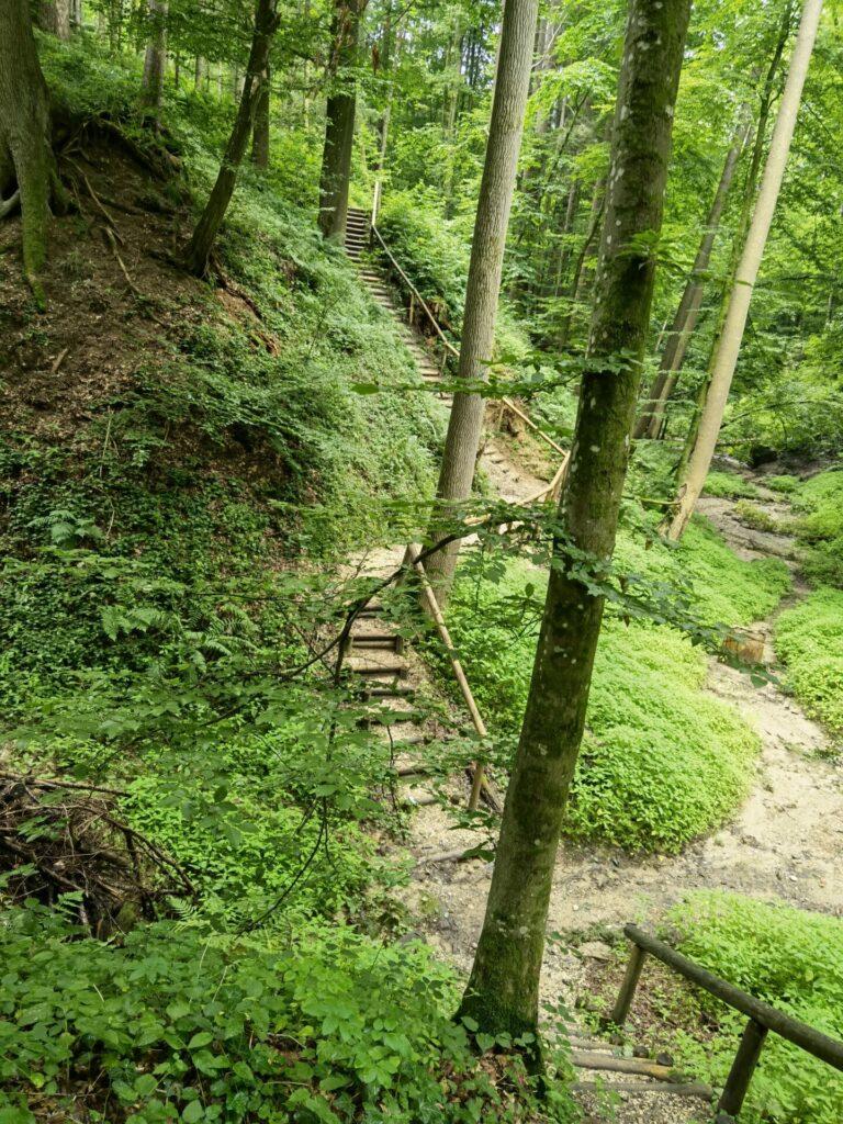 Holztreppen beim Naturerlebnispfad Hansenhohl