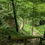 Thannhausen – Naturerlebnispfad Hansenhohl
