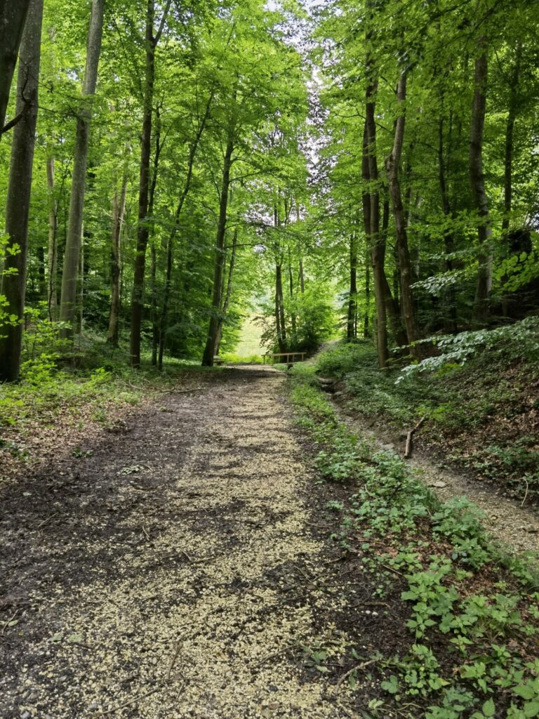 Naturerlebnispfad Hansenhohl – Anfang